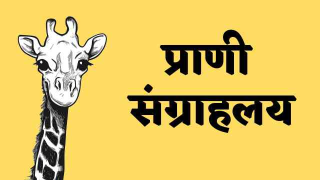 This is image of giraph used for Marathi essay on zoo
