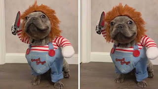 Chucky dog Halloween costume, Chucky doll video