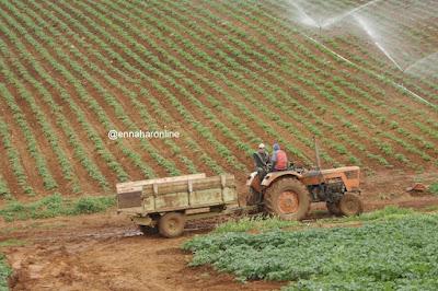 24 ألف منصب شغل عبر 97 مزرعة نموذجية قبل نهاية السنة