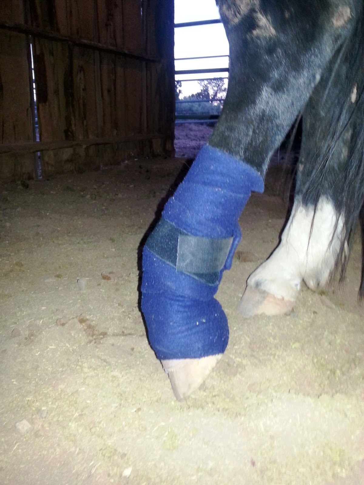 Equine Wellbeing Rescue Inc Maverick S Left Hind Leg Injury