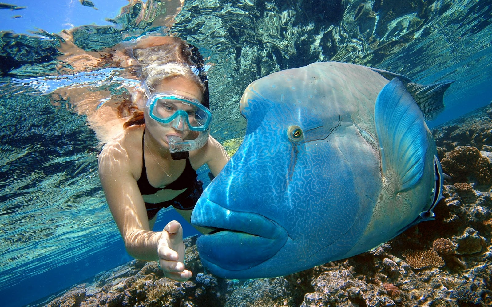 Great barrier reef mystery wallpaper - Great barrier reef desktop background ...