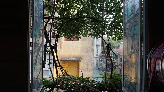 "5-storey house covered with vines by the former lecturer of Hanoi University of Civil Engineering, spent 30 years tending to the unique ""tree house""."