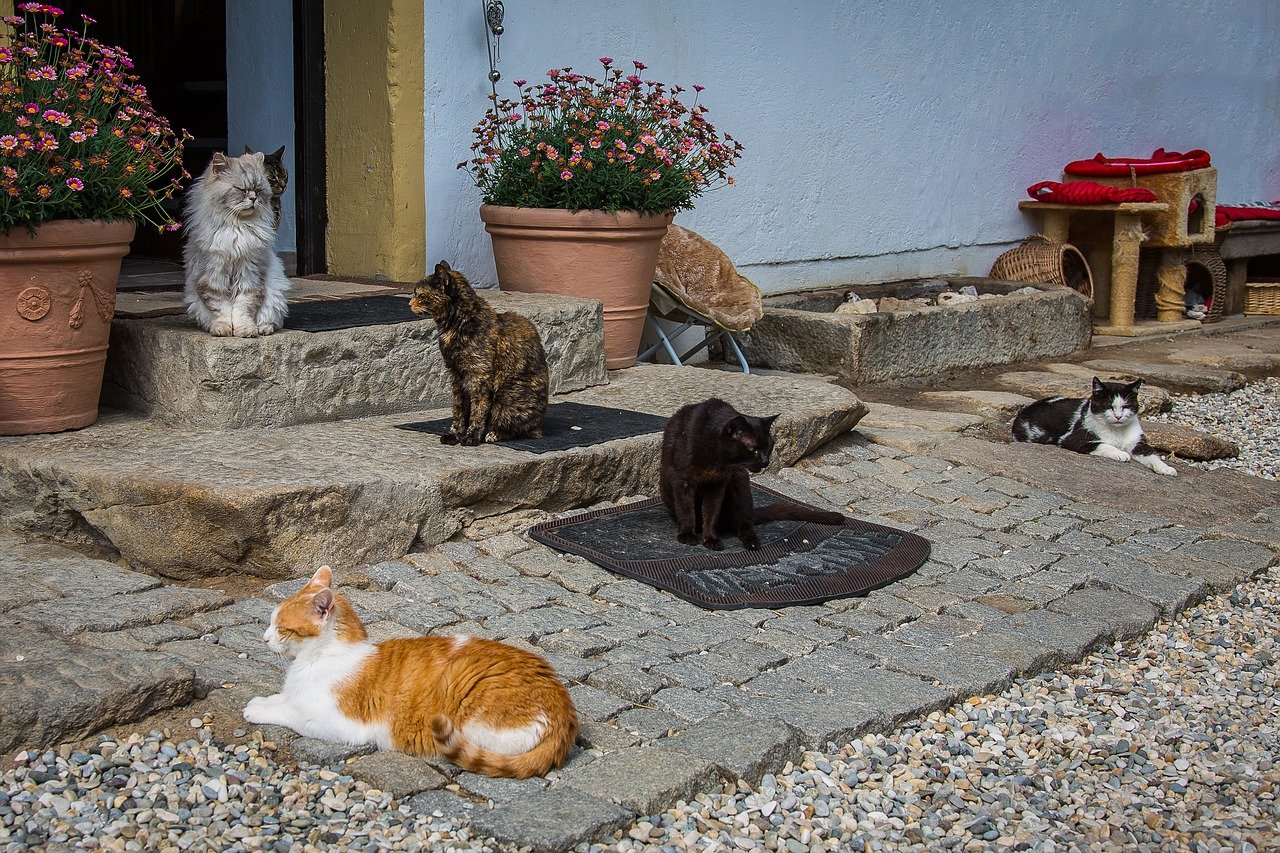 Great Ways To Help Animal Shelters, cats