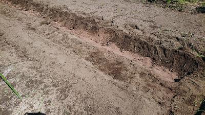 溝を掘って粉状ケイフンを溝内に撒きました