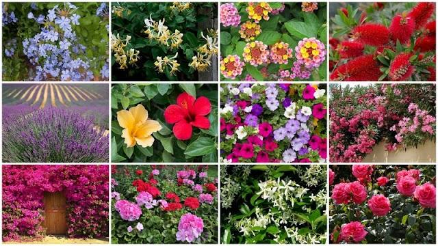 14 Καλοκαιρινά Φυτά ανθεκτικά στον ήλιο και τη ζέστη