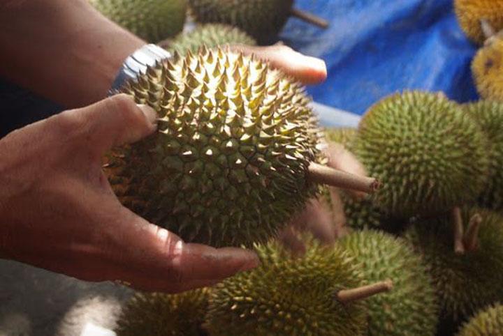 Pilih buah durian bentuk bulat