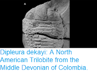 https://sciencythoughts.blogspot.com/2018/10/dipleura-dekayi-north-american.html