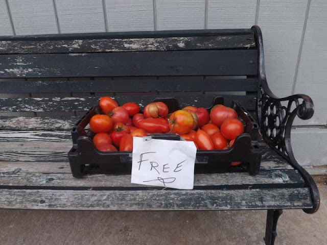 Free Tomatoes Seen on the Square, Metamora Herald