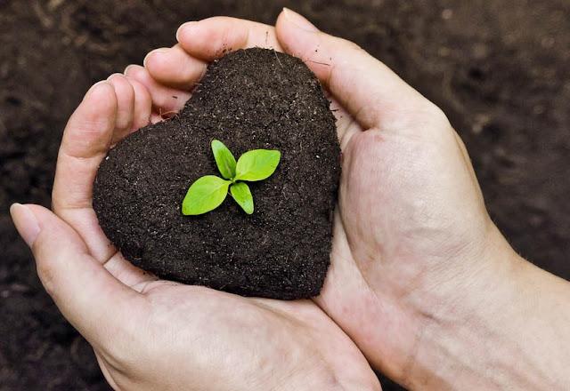 Resultado de imagem para plantar e colhe