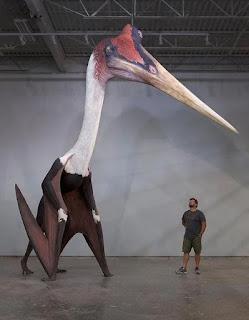 Động vật cổ đại Quetzalcoatlus với kích thước thật