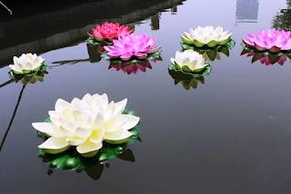 Kumpulan Bunga Teratai Di Permukaan Air_Lotus Flower Picture
