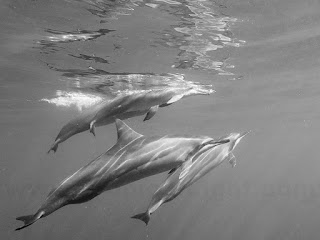 http://www.tropicallight.com/water/dolphins/27oct17dolphins/27oct17dolphins.html