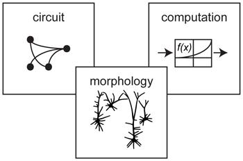 Dipole Neurology: Visual morphology used as method by