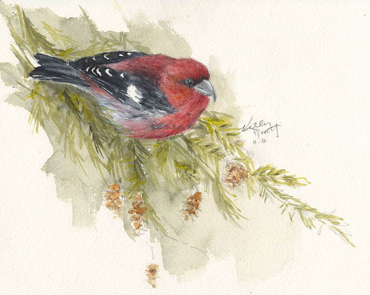 White-winged Crossbill in an Eastern Hemlock Tree. Original watercolor by Kelly Riccetti