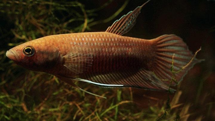 types of male betta fish