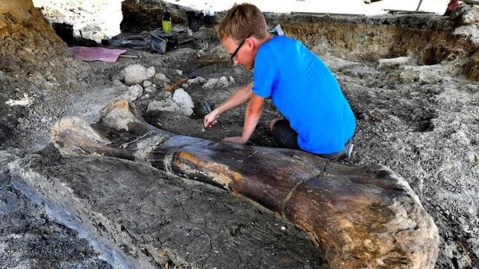 Fosil tulang dinosaurus raksasa ditemukan di Prancis