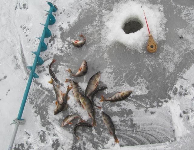 зимняя рыбалка  сезон 2019-2020 г.г.