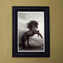 Wild Horse Wall Frames, Framed Print, in Port Harcourt Nigeria