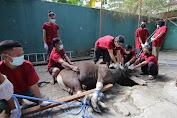 Pertamina Sambut Idul Adha 2020 di Sulawesi dengan Gelar Sholat Bersama dan Pembagian Hewan Kurban
