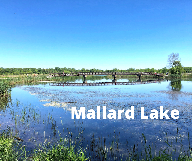Mallard Lake in Hanover Park, Illinois Eases the Mind with Fantastic Lake Views