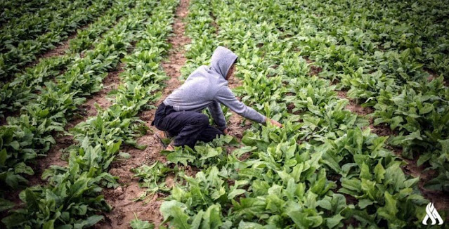 لجنة الزراعة النيابية: ننتظر قانوناً يدعم الإنتاج المحلي ويشغِّل العاطلين
