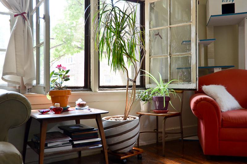 10 piante che purificano l 39 aria di casa donneinpink magazine - Piante che purificano l aria in camera da letto ...
