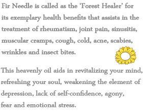 medicinal benefits of fir tree