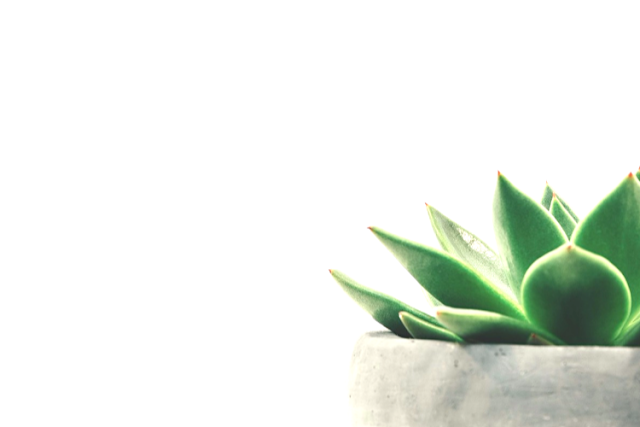 ce-que-minimalisme-apporte-goldandgreen