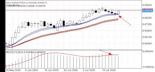Solusi untuk trader yang tidak bisa analisa market