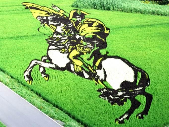 napoleon art on paddy field