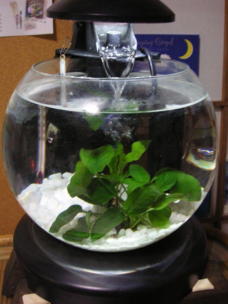 Do About Betta Fish Tank Heater