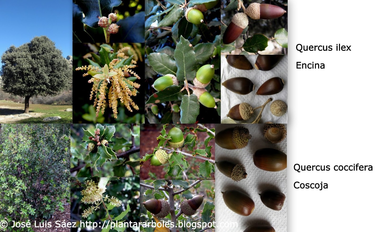 Plantar rboles y arbustos tipos de frutos y semillas - Lista nombre arbustos ...
