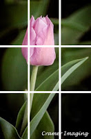 A guide image on the rule of thirds photography rule on a pink tulip flower photograph as done by Cramer Imaging