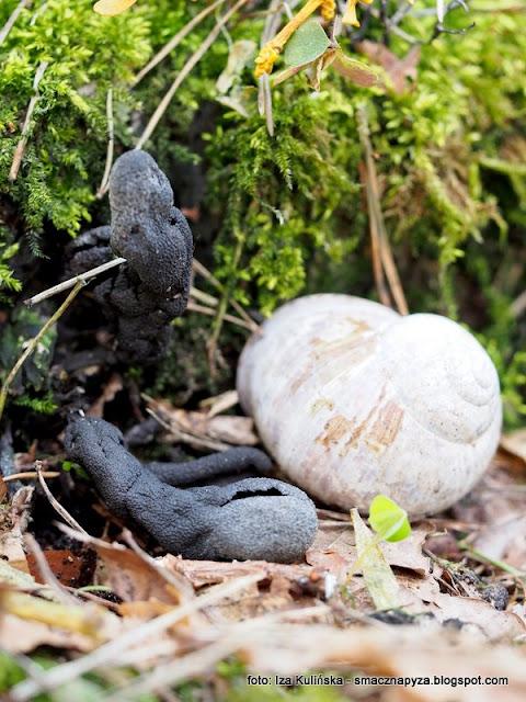 grzyby, grzyb, grzybobranie, las, w lesie, palce umarlaka