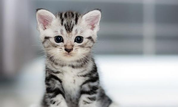 Cara Membersihkan Bulu Kucing di Pakaian