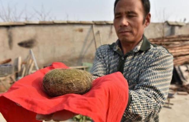एक सूअर इस किसान को बना गया मालामाल, मिली ऐसी चीज़