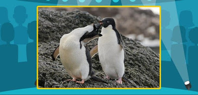 Q 9. Let's see how well you know the natural world! What type of penguin is this?
