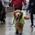 Ένας σκύλος από το Σικάγο απέκτησε τον δικό του λογαριασμό στο Instagram για έναν πολύ γλυκό λόγο (video)
