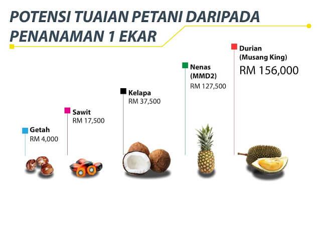 Pendapatan Kelapa
