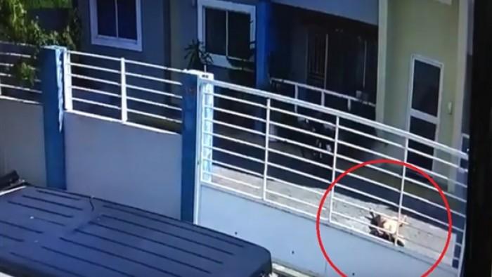 مذيعة شهيرة تحاول الانتحار بإلقاء نفسها من الطابق الثالث.. فيديو