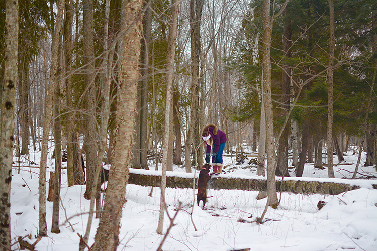 Winter walk in the woods | My Darling Days Blog