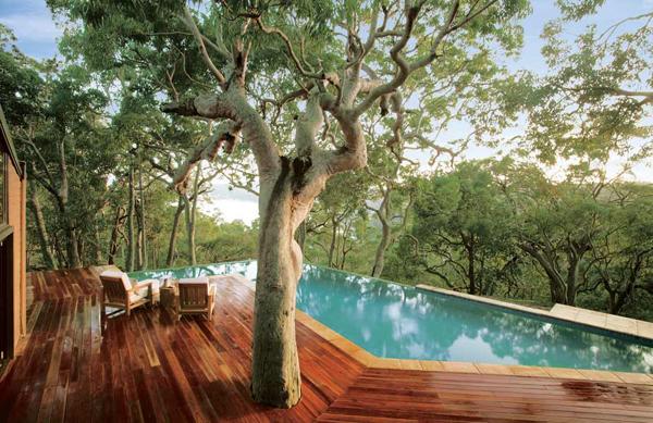 สร้างต้นไม้ใหญ่ใกล้สระว่ายน้ำ