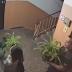 На Оболоні молода пара викрала з під'їзду вазони