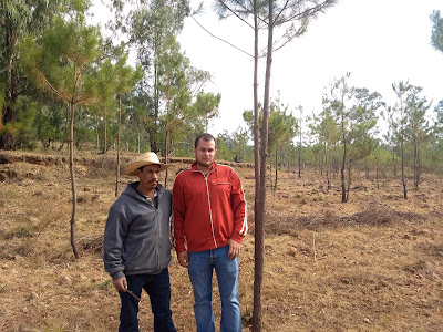 Reforestation Conafor Michoacan Mexico ecological restoration pines community