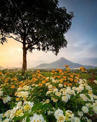taman bunga adn firdaus pasuruan