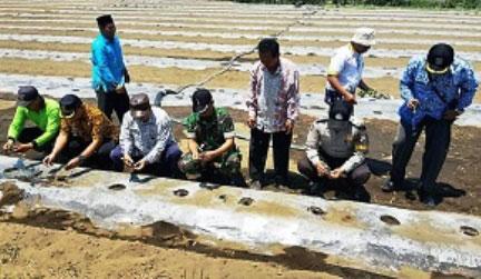 Lahan pertanian komoditas semangka di Desa Wotgalih