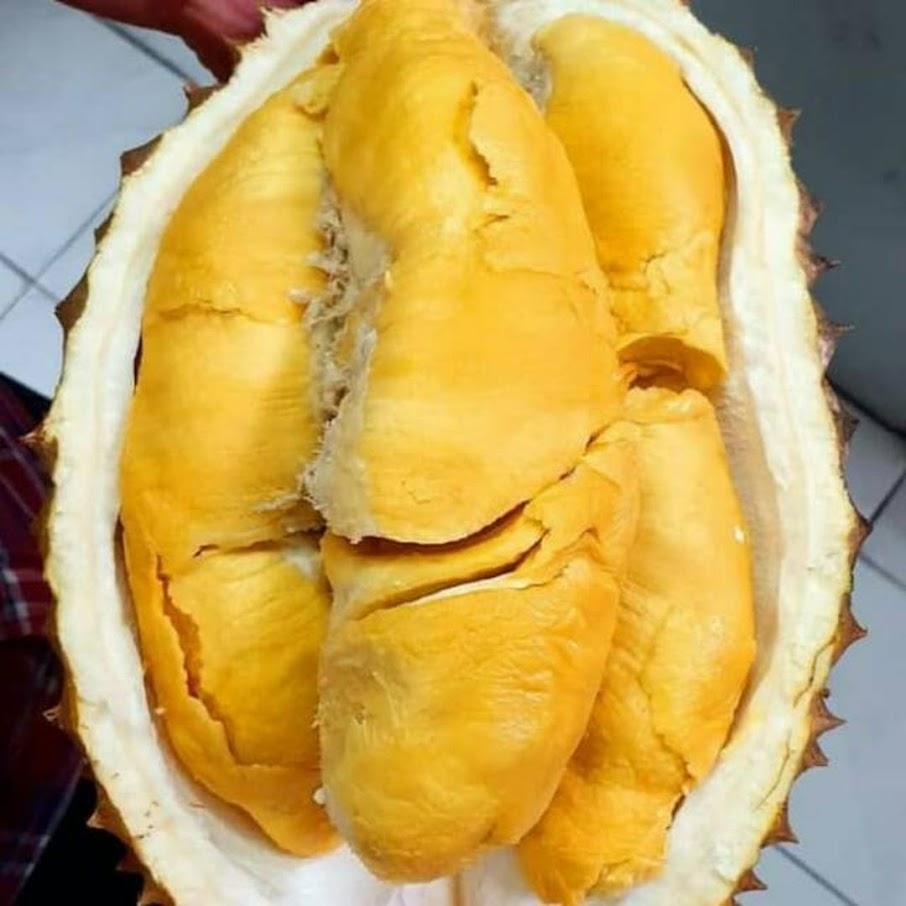 Bibit Durian Bawor Super Berkualitas Kota Administrasi Jakarta Pusat