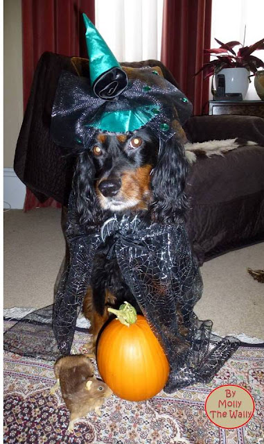 Molly The Wally Halloween Witch.