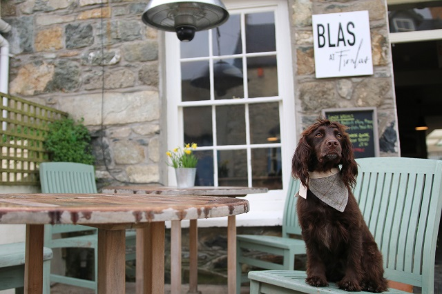 Places to Visit in Pembrokeshire with your Dog