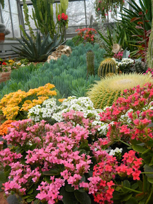 Kalanchoes at Etobicoke's Centennial Park Conservatory  by garden muses-not another Toronto gardening blog